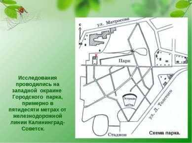 Исследования проводились на западной окраине Городского парка, примерно в пят...