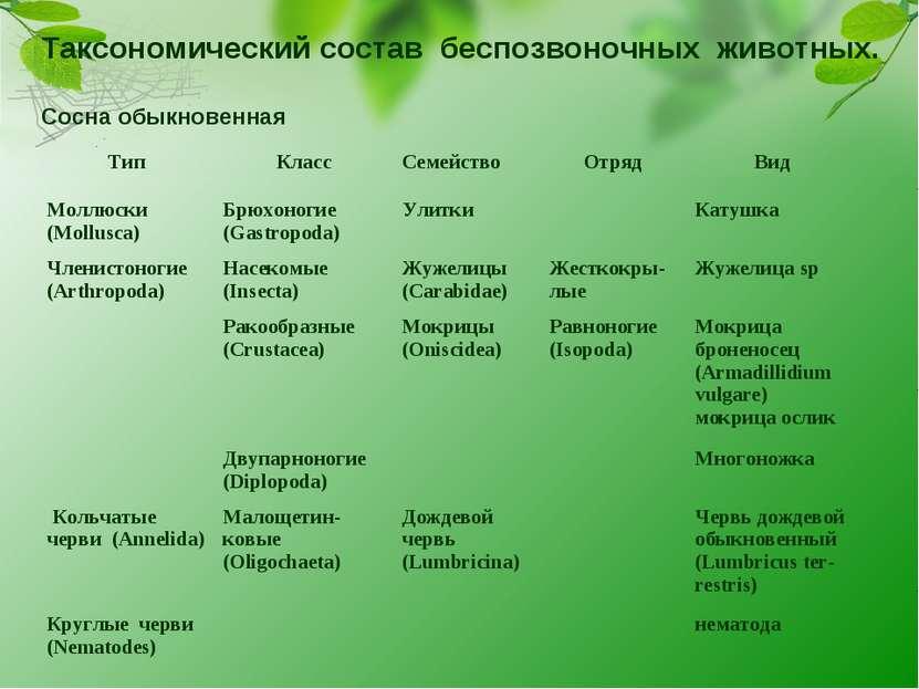 Таксономический состав беспозвоночных животных. Сосна обыкновенная Тип Класс ...
