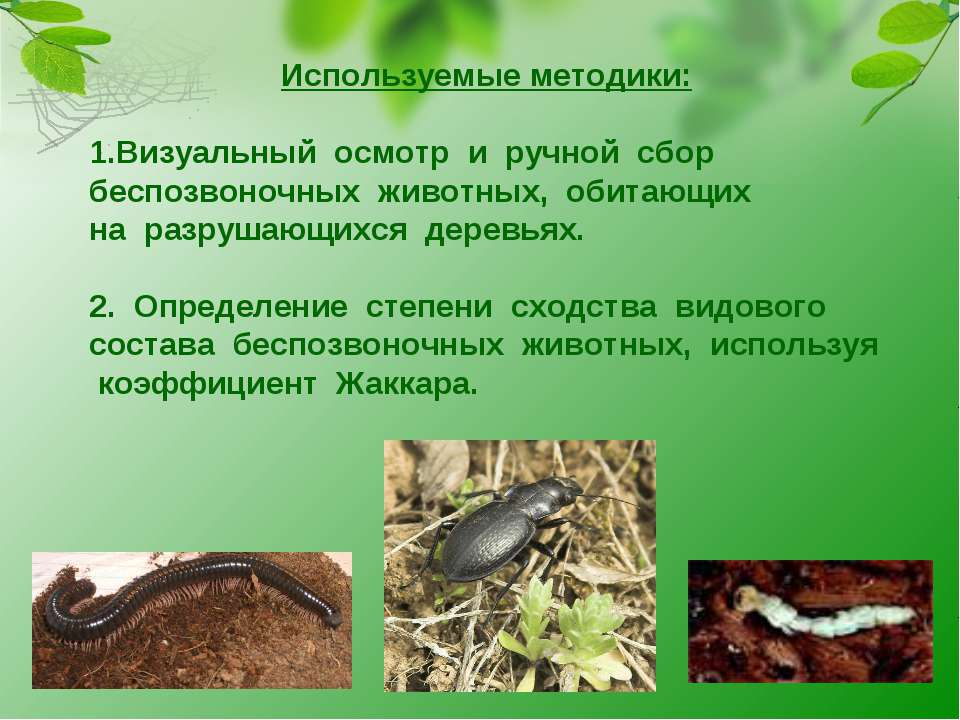 Используемые методики: Визуальный осмотр и ручной сбор беспозвоночных животны...