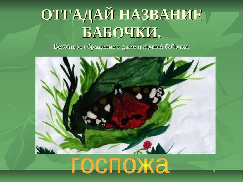 ОТГАДАЙ НАЗВАНИЕ БАБОЧКИ. Вежливое обращение к даме и ночная бабочка.