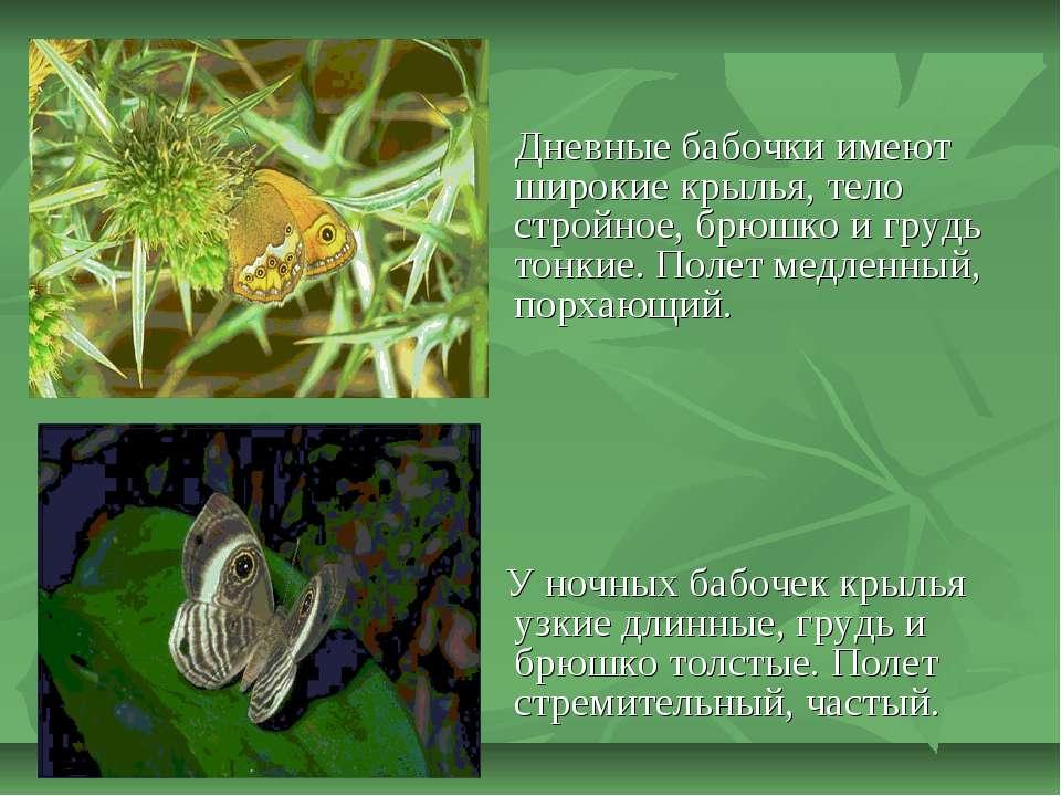 Дневные бабочки имеют широкие крылья, тело стройное, брюшко и грудь тонкие. П...
