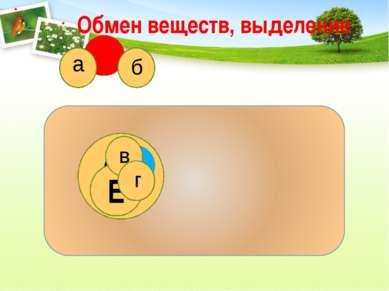 Обмен веществ, выделение Е АБ а б в г