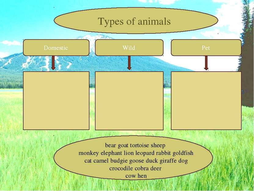 Domestic Wild Pet Types of animals bear goat tortoise sheep monkey elephant l...