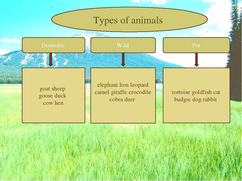 Domestic Wild Pet goat sheep goose duck cow hen elephant lion leopard camel g...