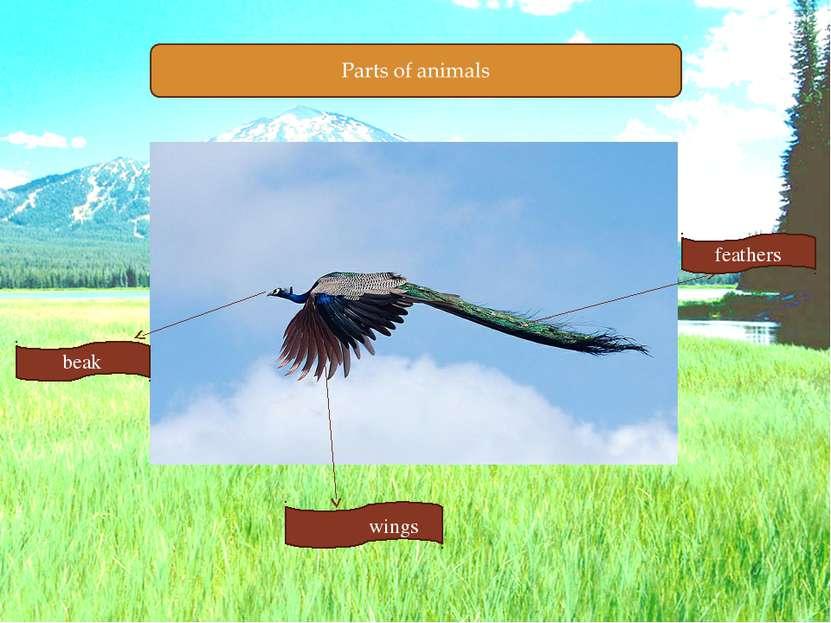 beak feathers wings