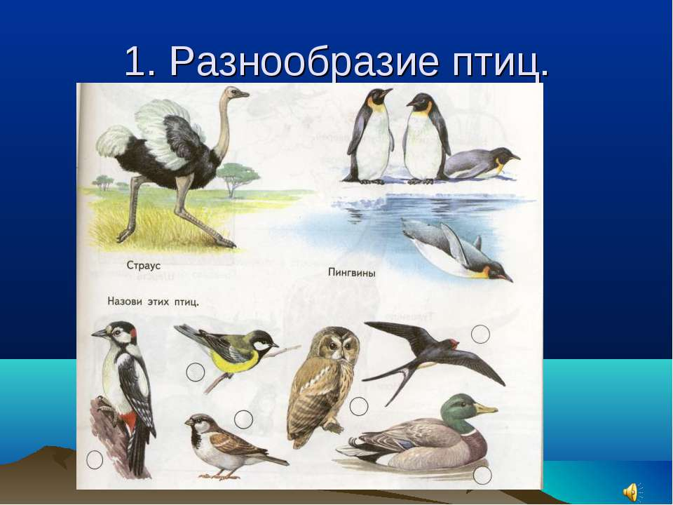 1. Разнообразие птиц.