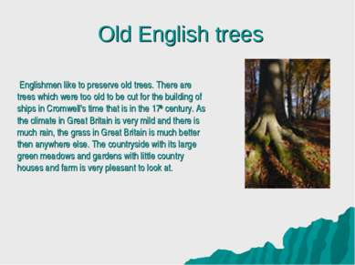 Old English trees Englishmen like to preserve old trees. There are trees whic...