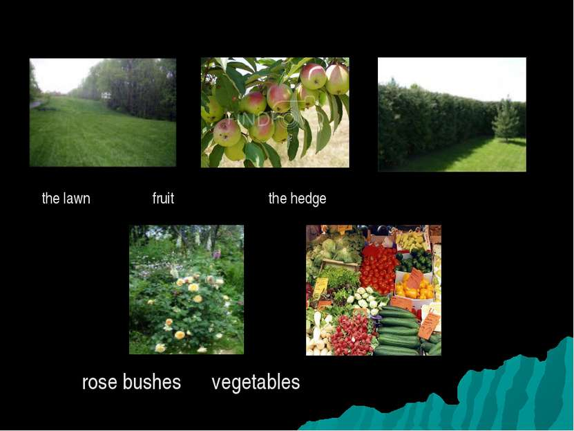 the lawn fruit the hedge rose bushes vegetables