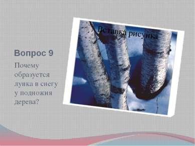 Вопрос 9 Почему образуется лунка в снегу у подножия дерева?