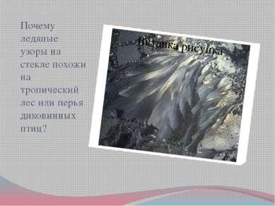 Почему ледяные узоры на стекле похожи на тропический лес или перья диковинных...