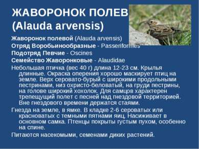 ЖАВОРОНОК ПОЛЕВОЙ (Alauda arvensis) Жаворонок полевой (Alauda arvensis) Отряд...
