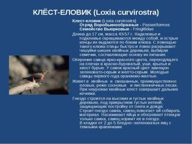 КЛЁСТ-ЕЛОВИК (Loxia curvirostra) Клест-еловик (Loxia curvirostra) Отряд Вороб...