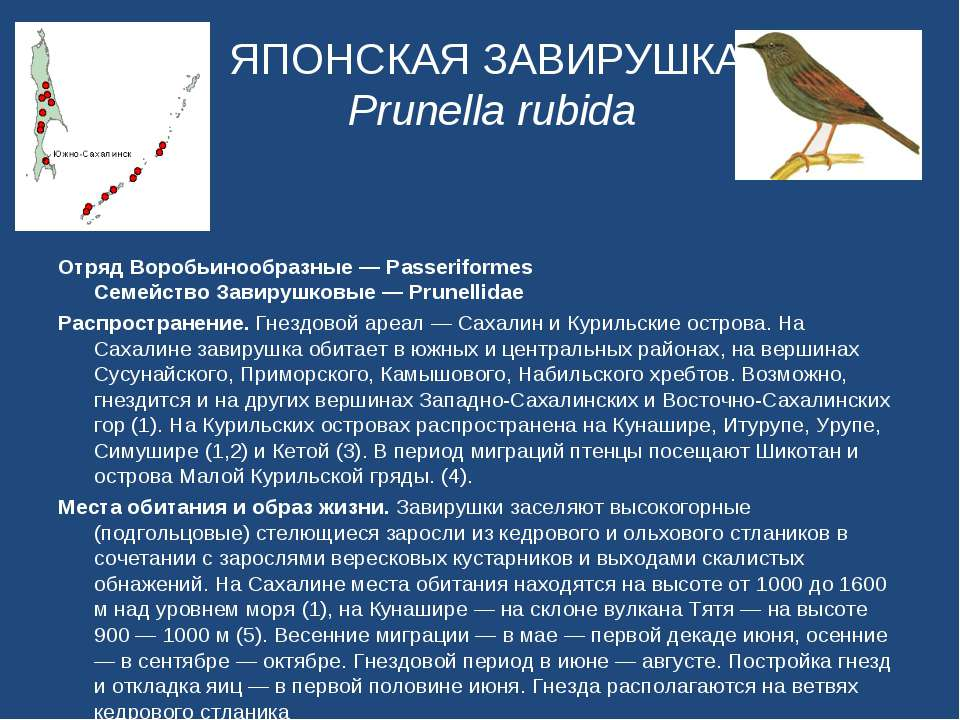 ЯПОНСКАЯ ЗАВИРУШКА Prunella rubida Отряд Воробьинообразные — Passeriformes Се...