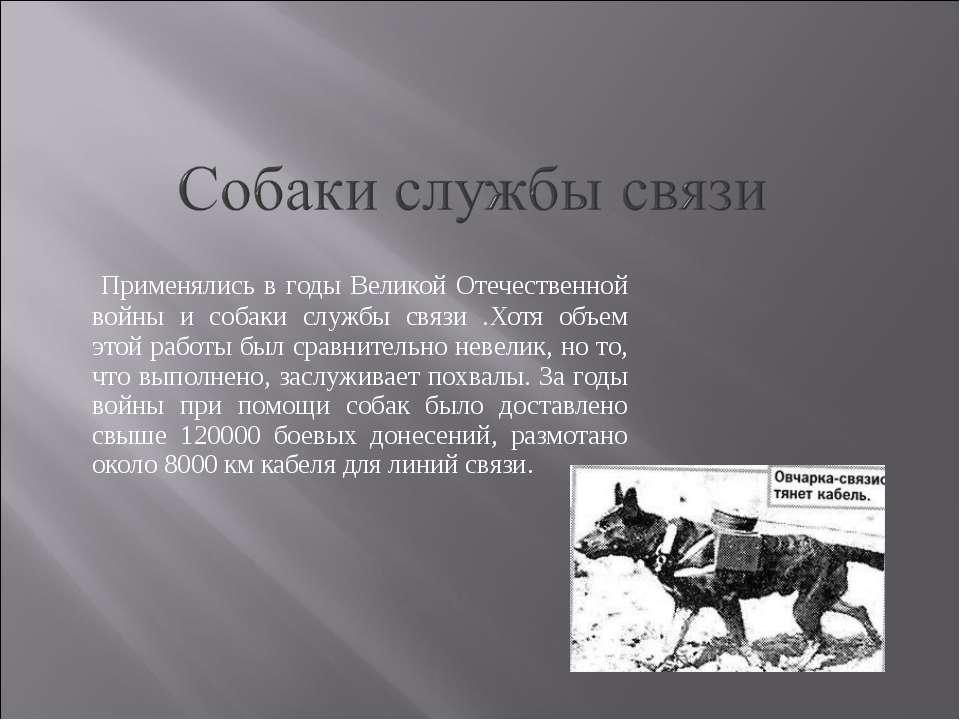Применялись в годы Великой Отечественной войны и собаки службы связи .Хотя об...