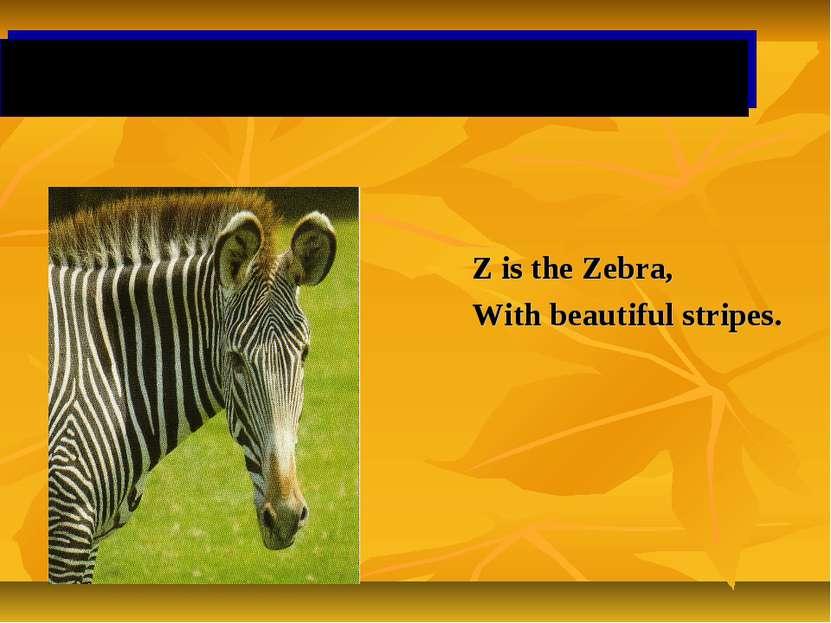 Z is the Zebra, With beautiful stripes.