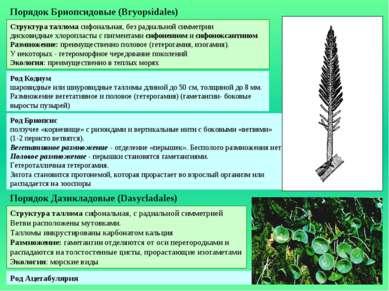 Род Кодиум шаровидные или шнуровидные талломы длиной до 50 см, толщиной до 8 ...