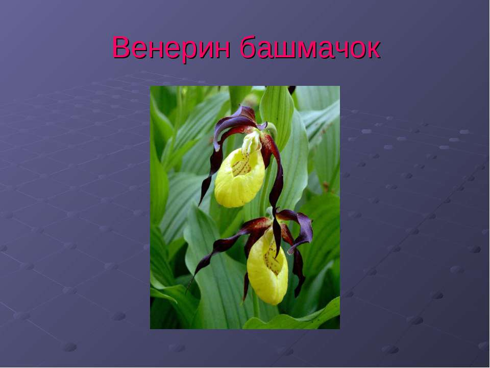 Красная книга оренбургской области презентация скачать