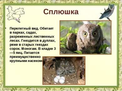 Сплюшка Перелетный вид. Обитает в парках, садах, разреженных лиственных лесах...