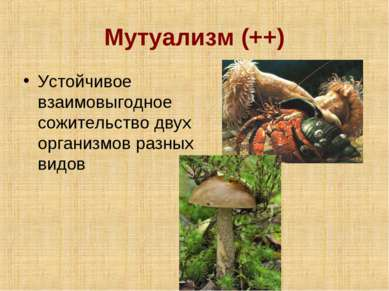 Мутуализм (++) Устойчивое взаимовыгодное сожительство двух организмов разных ...