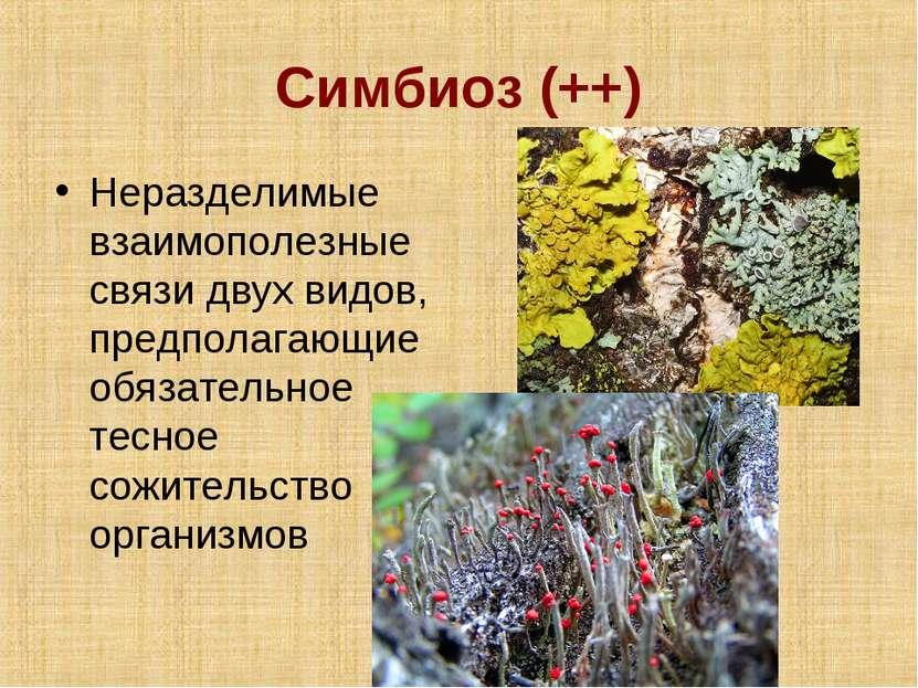 Симбиоз (++) Неразделимые взаимополезные связи двух видов, предполагающие обя...