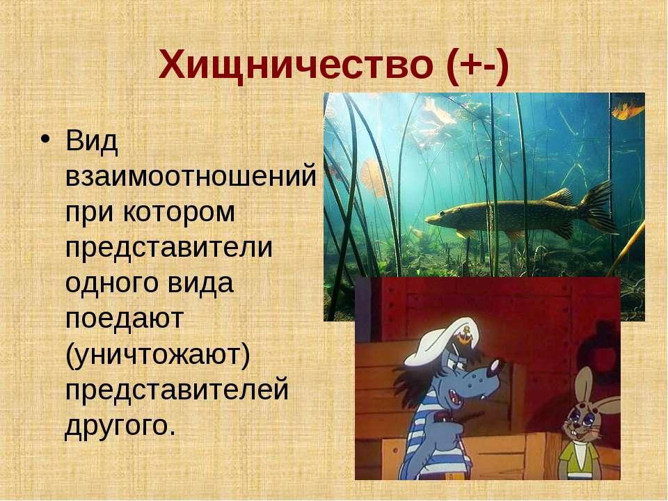 Хищничество (+-) Вид взаимоотношений при котором представители одного вида по...