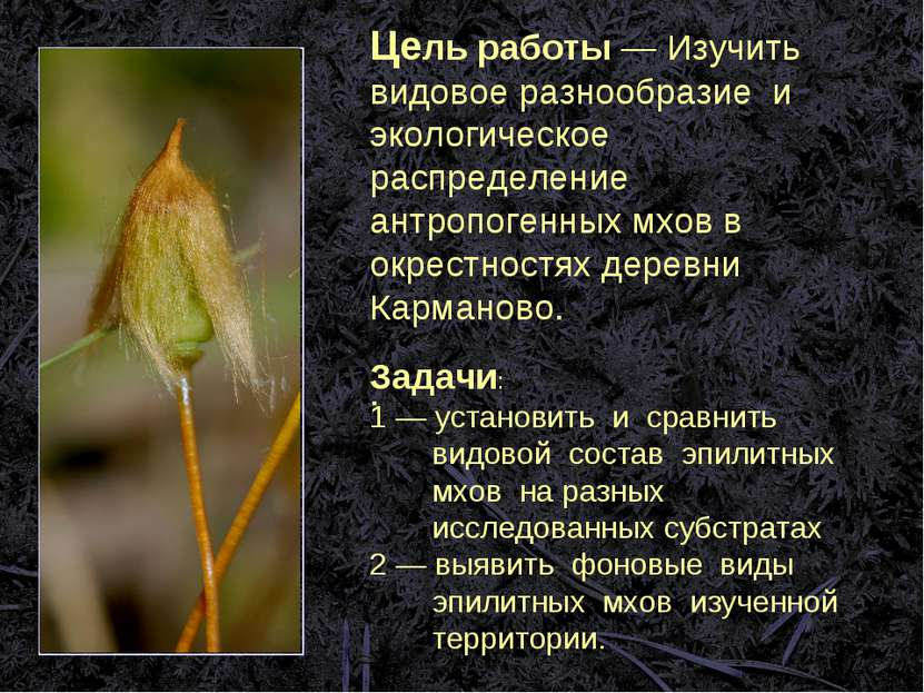 Цель работы ― Изучить видовое разнообразие и экологическое распределение антр...