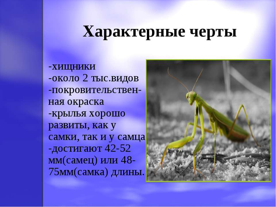 Характерные черты -хищники -около 2 тыс.видов -покровительствен-ная окраска -...