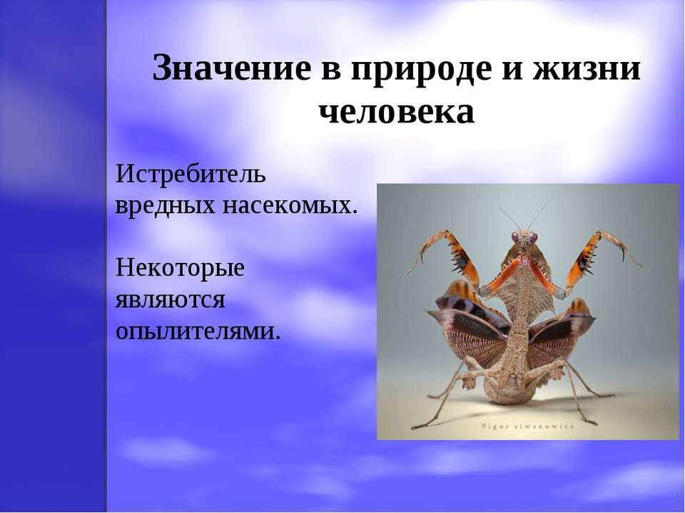 Значение в природе и жизни человека Истребитель вредных насекомых. Некоторые ...