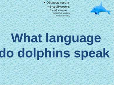What language do dolphins speak ?