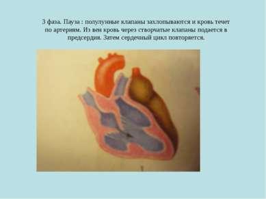 3 фаза. Пауза : полулунные клапаны захлопываются и кровь течет по артериям. И...