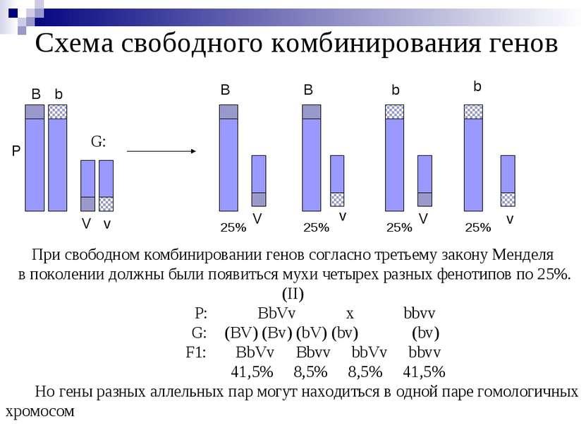 Схема свободного комбинирования генов Р B b V v B B b b V V v v При свободном...
