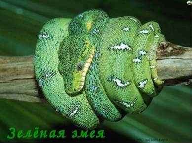 Зелёная змея Лазарева Лидия Андреевна, учитель начальных классов, Рижская осн...