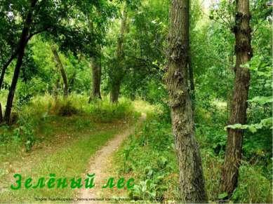 Зелёный лес Лазарева Лидия Андреевна, учитель начальных классов, Рижская осно...