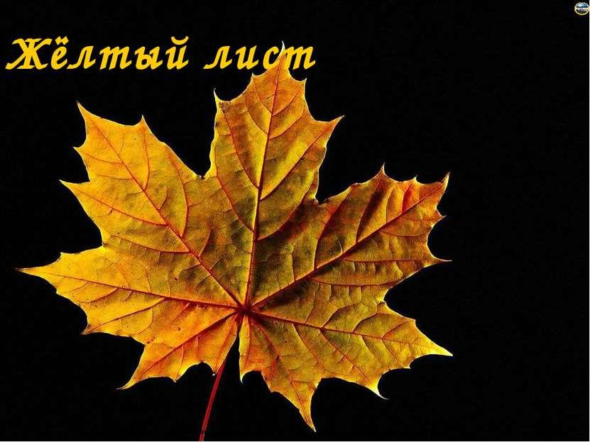 Жёлтый лист Лазарева Лидия Андреевна, учитель начальных классов, Рижская осно...