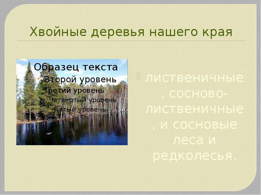 Хвойные деревья нашего края лиственичные, сосново-лиственичные, и сосновые ле...
