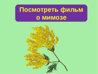 Посмотреть фильм о мимозе