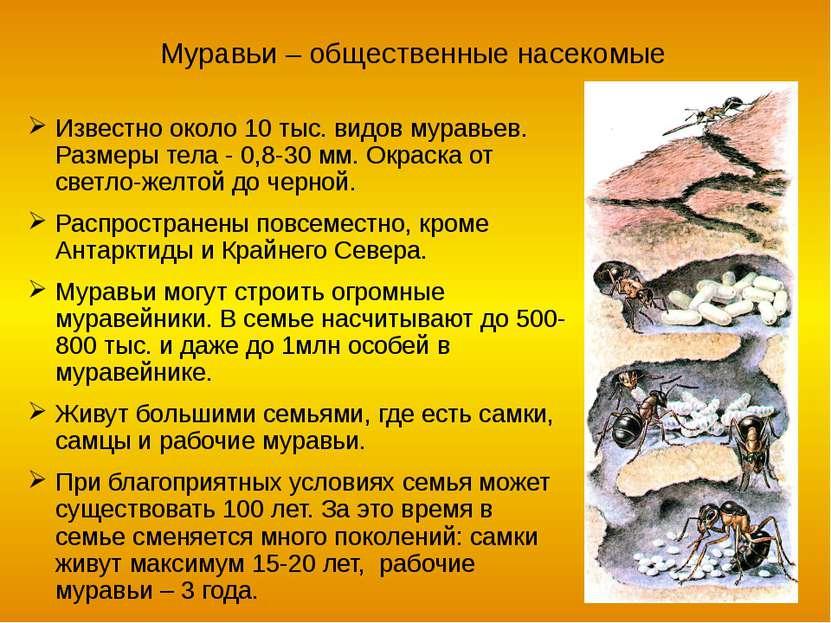 Значение перепончатокрылых в природе и жизни человека Почвообразователи Мед, ...