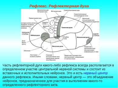 Рефлекс. Рефлекторная дуга Часть рефлекторной дуги какого-либо рефлекса всегд...