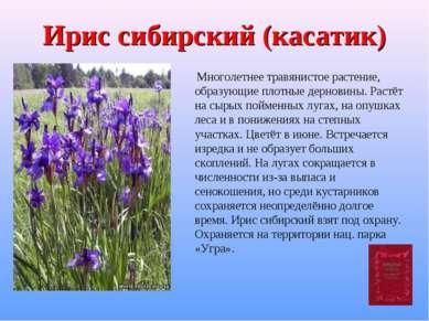 Ирис сибирский (касатик) Многолетнее травянистое растение, образующие плотные...