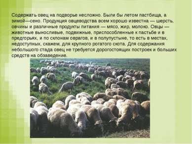 Содержать овец на подворье несложно. Были бы летом пастбища, а зимой—сено. Пр...