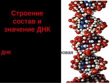 Строение состав и значение ДНК ДНК –дезоксирибонуклеиновая кислота
