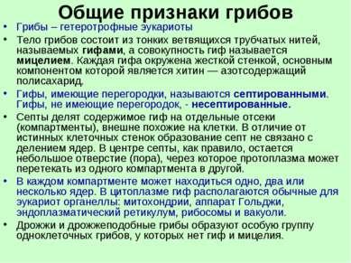 Общие признаки грибов Грибы – гетеротрофные эукариоты Тело грибов состоит из ...