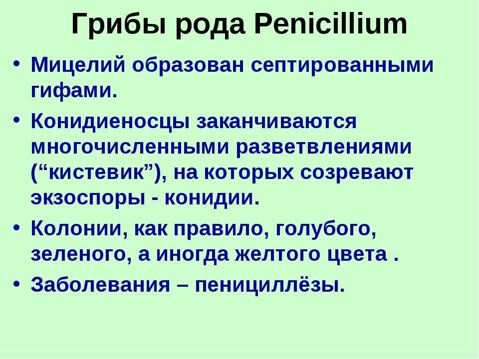 Грибы рода Penicillium Мицелий образован септированными гифами. Конидиеносцы ...