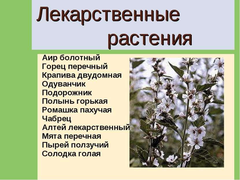 Лекарственные растения Аир болотный Горец перечный Крапива двудомная Одуванчи...