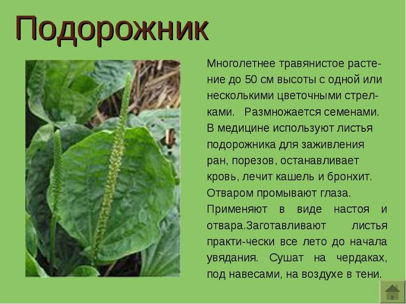 Многолетнее травянистое расте-ние до 50 см высоты с одной или несколькими цве...