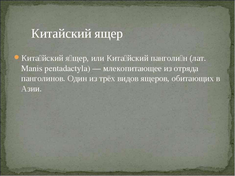Кита йский я щер, или Кита йский панголи н (лат. Manis pentadactyla) — млекоп...