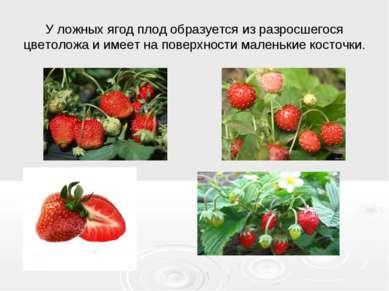 У ложных ягод плод образуется из разросшегося цветоложа и имеет на поверхност...
