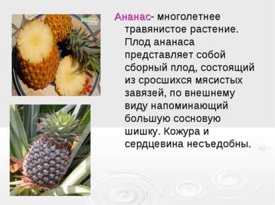 Ананас- многолетнее травянистое растение. Плод ананаса представляет собой сбо...