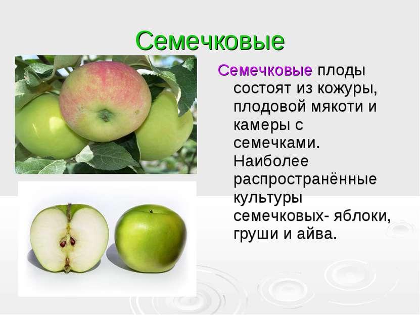 Семечковые Семечковые плоды состоят из кожуры, плодовой мякоти и камеры с сем...