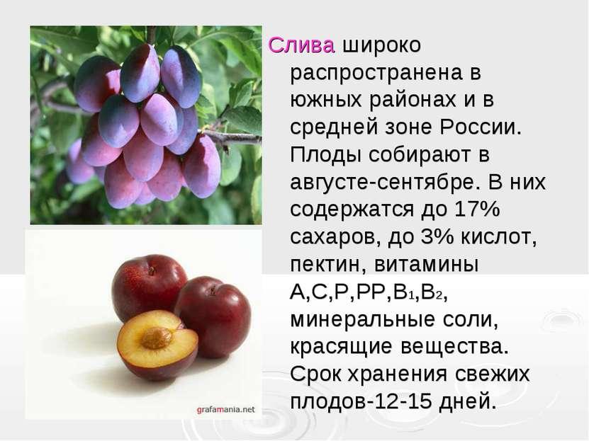 Слива широко распространена в южных районах и в средней зоне России. Плоды со...